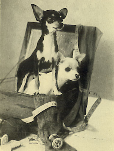 Vintage Chihuahuas of the 1940svint-suitcase